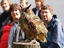 Click image for larger version.  Name:european_eagle_owl_P8286398.jpg Views:263 Size:274.2 KB ID:15710